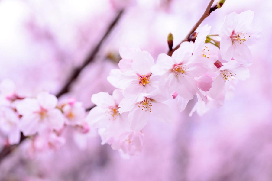 桜の季節にリグヴェーダからエクラへ